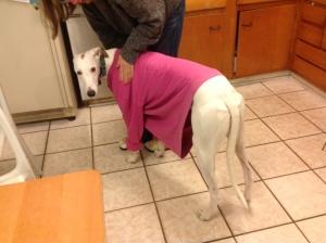 Feeling ashamed in my old sweatshirt. Hey, he gets cold!