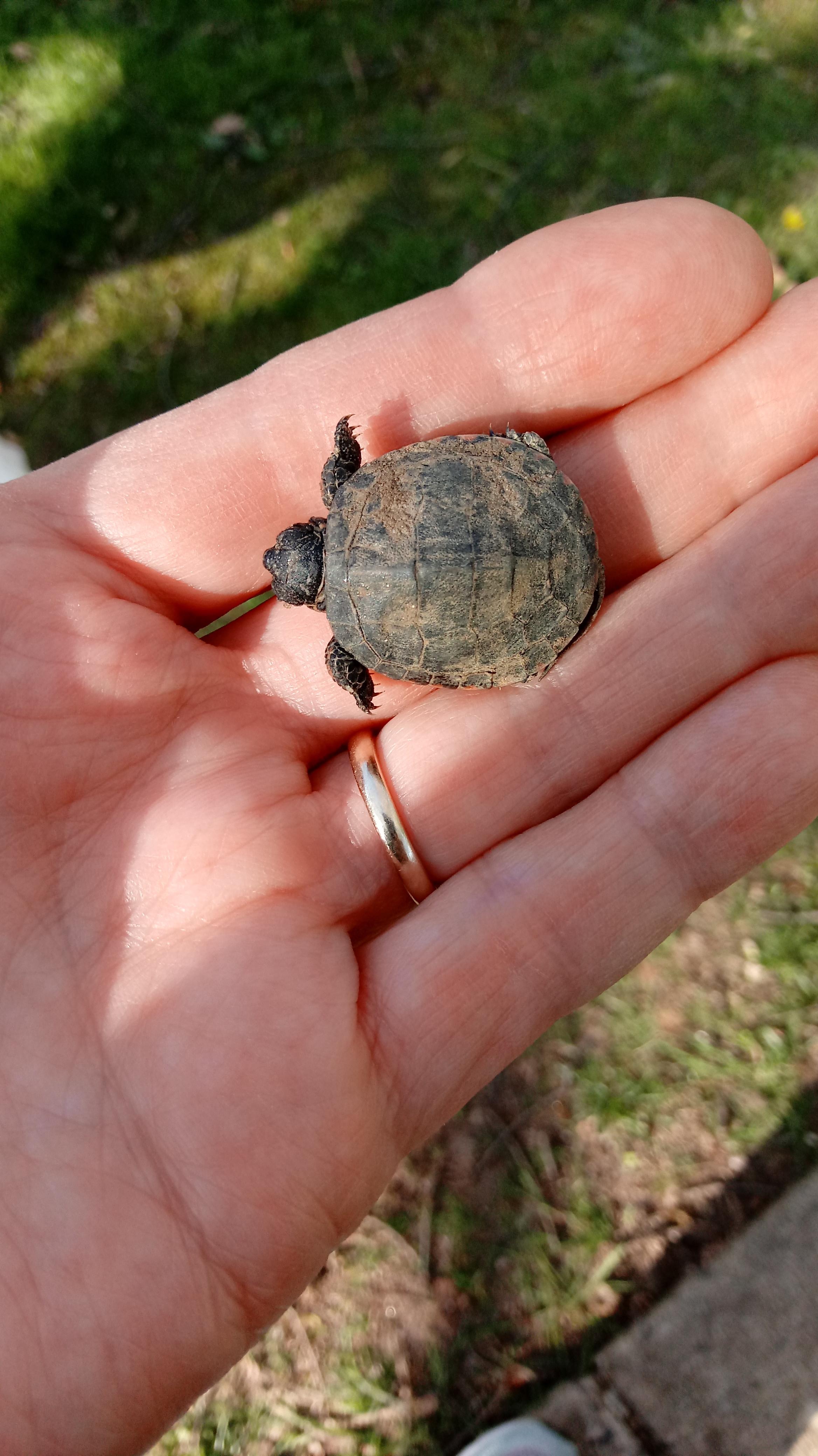 Turtle 1 Duplicate