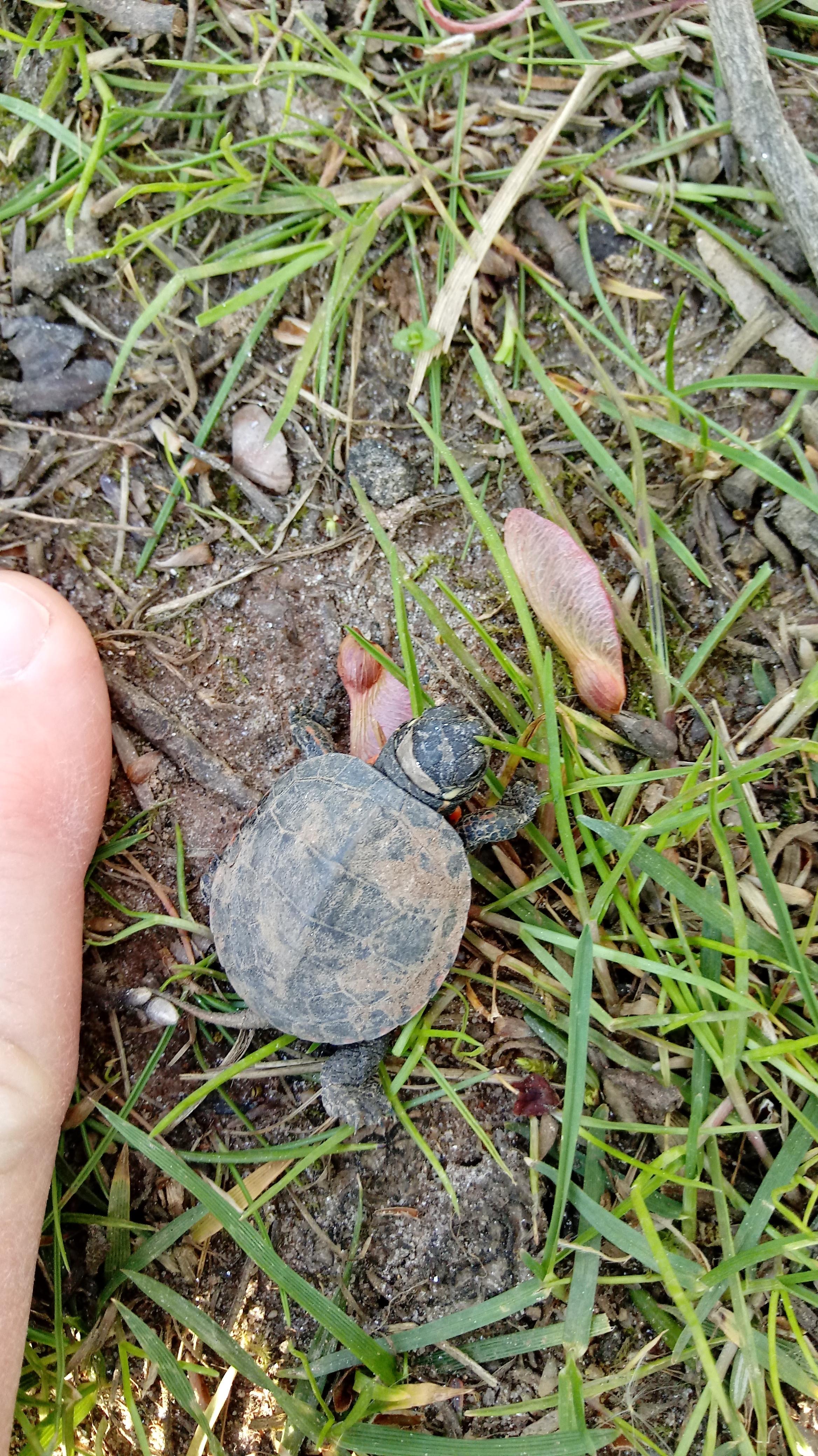 Turtle 2 copy