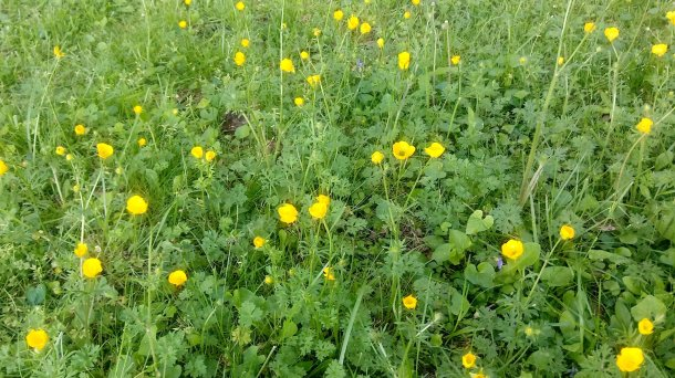 summer 2020 yellow flowers